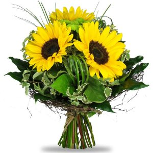 Gemini Sunflowers